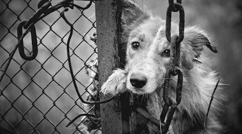 Άμεση σχέση της κακοποίησης των ζώων με τη βαριά εγκληματικότητα και την κακοποίηση παιδιών και γυναικών