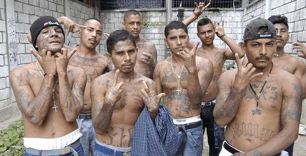 Nearly 300 MS-13 gank members arrested