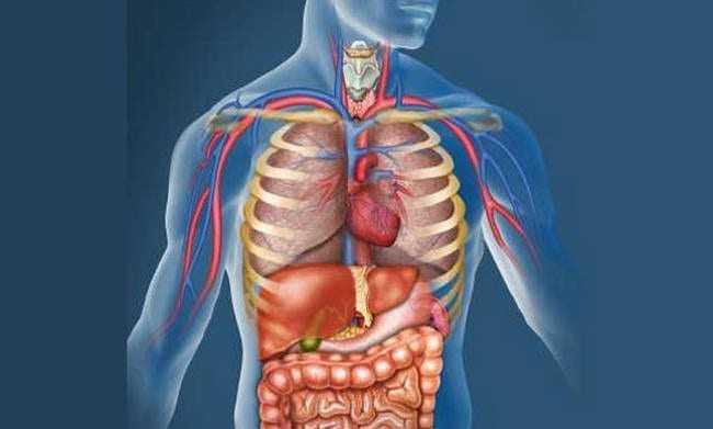 Επιστήμονες ανακάλυψαν νέο μεγάλο όργανο στο ανθρώπινο σώμα